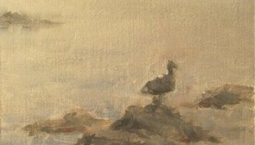 rocks_gull_fog